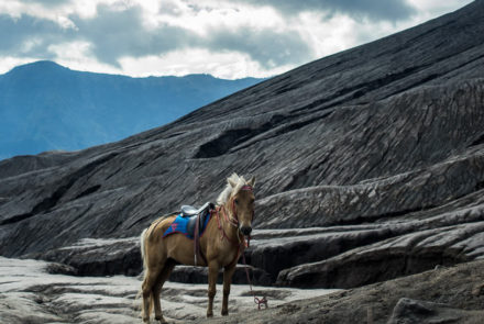 Pony in the Lava field